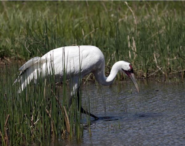 birdwatching in texas
